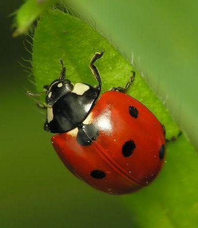 A rovarok hossza, Szöcske, tücsök vagy sáska? Vagy egyik sem?